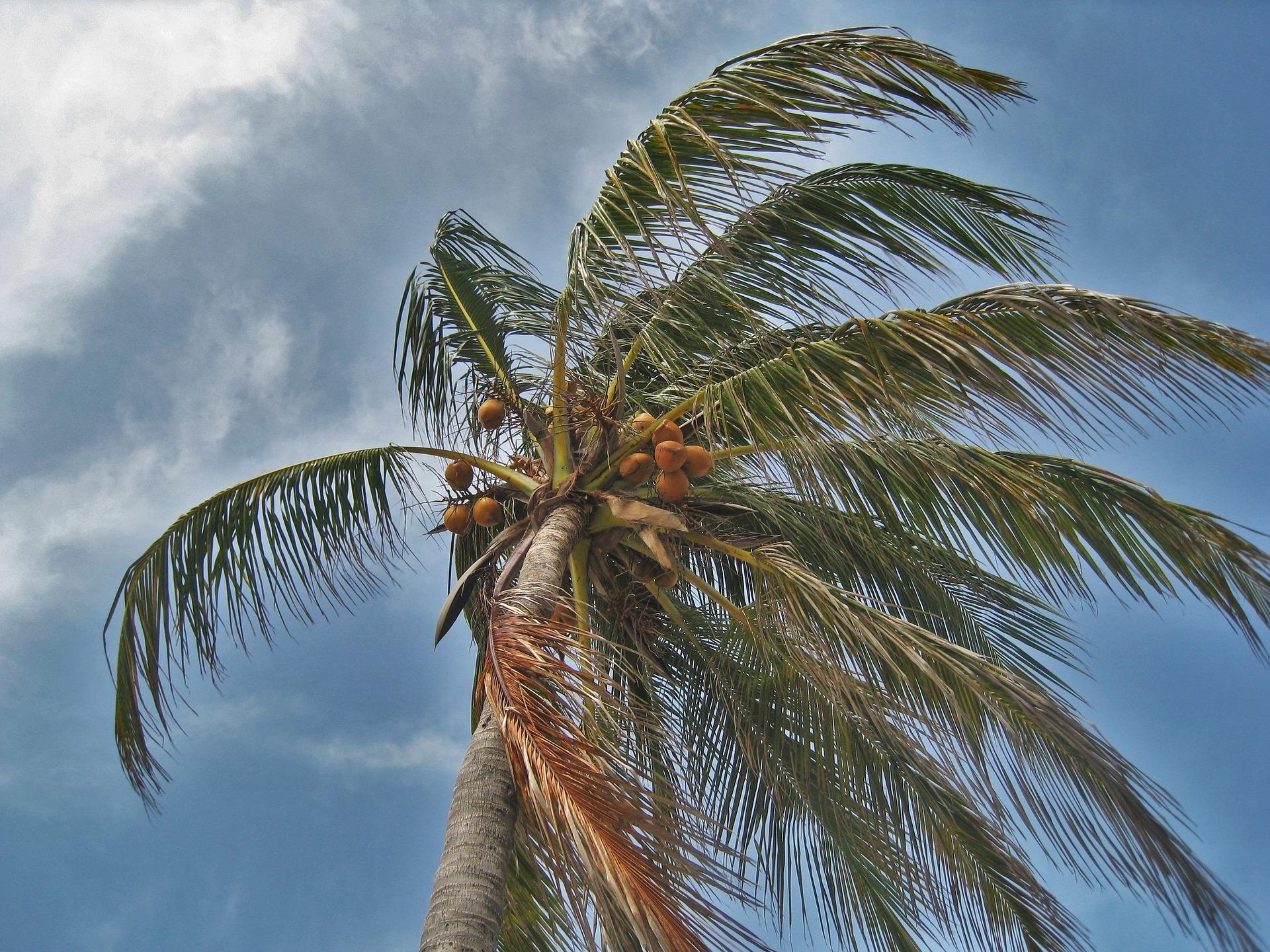 Hurricane Irma: Rick's Story